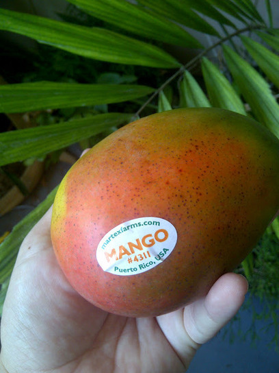 The Rainforest Garden: Why Your Mango Tastes Awful | Annie Haven | Haven Brand | Scoop.it