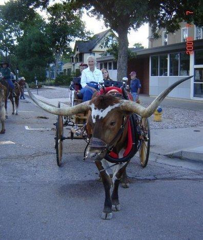 Premier Longhorns's Photos | Facebook | Carriage Driving Radio Show | Scoop.it