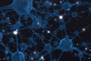 La thérapie cellulaire pourrait réparer des lésions du cortex | Veille scientifique Neuroscience | Scoop.it