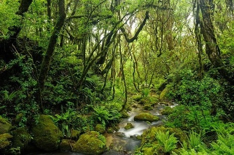 Kumpulan Pantun Lingkungan Paling Inspiratif   Pemanasan Global   Scoop.it