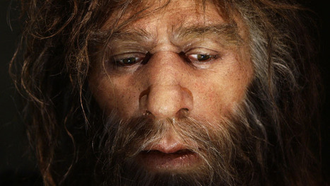 Modern humans may have copied Neanderthal technology - Technology & Science - CBC News | Social Studies Infromation | Scoop.it
