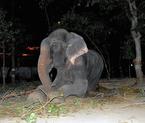 An Elephant Cried When He Was Rescued After 50 Years Of Suffering   Daily Crew   Scoop.it