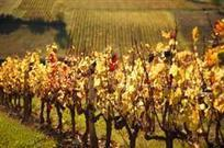 Beaujolais Discovery - Guided Walking Holiday in Beaujolais, France | Beaujolais | Scoop.it