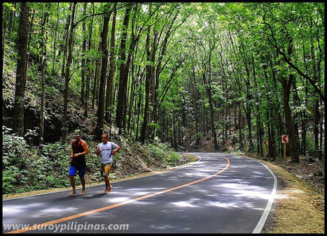 SUROY PILIPINAS - A Philippine Travel Blog: Bohol: Two Sides of Bilar Man-Made Forest | Pinoy Travel Bloggers Journal | Scoop.it