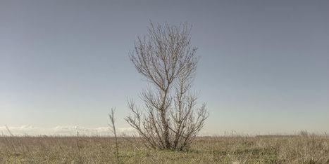 La compensation, un «permis de détruire» la nature? | Veille en dilettante | Scoop.it