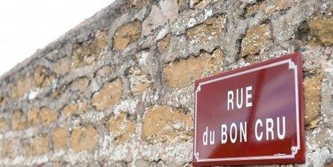 De quel mal souffre le Beaujolais ? | Le Vin et + encore | Scoop.it