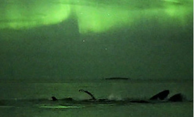 Humpback whales play under the Aurora - The Local.no   Sony A7 & A7R Full Frame ILC Mirrorless Cameras   Scoop.it