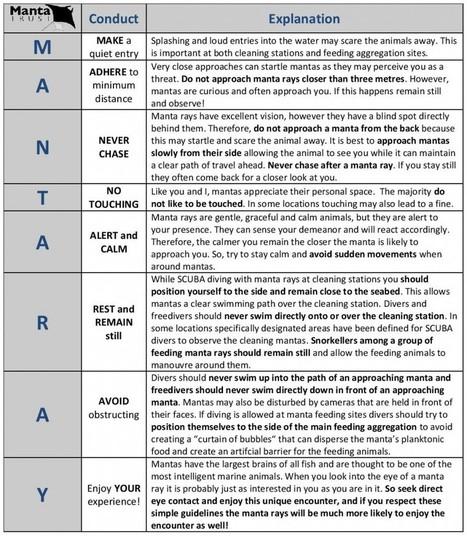 Code de conduite pour observer les raies Manta | Rays' world - Le monde des raies | Scoop.it
