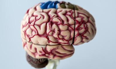 Long-term damage seen from brain injuries: Swedish study | Brain Injury | Scoop.it