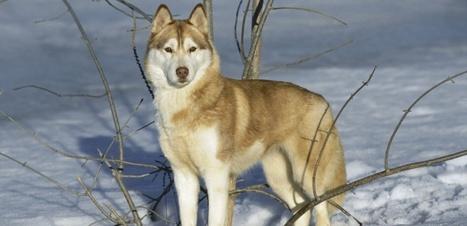 Le chien provient du continent eurasiatique | Merveilles - Marvels | Scoop.it