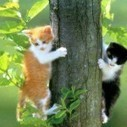 2 funny cat  Arise  in a  big tree | 2 dogs are very happy | Scoop.it