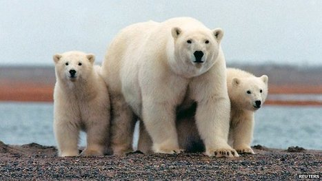 Obama push to expand Alaskan refuge | G+P US | Scoop.it