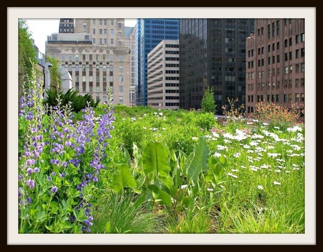Chicago Rooftop Gardens | Chicago Apartments Blog | Chicago Entertainment | Scoop.it