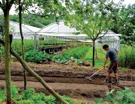 La micro-ferme, modèle agricole pour le 21ème siècle ? | Un potager dans la ville | Scoop.it