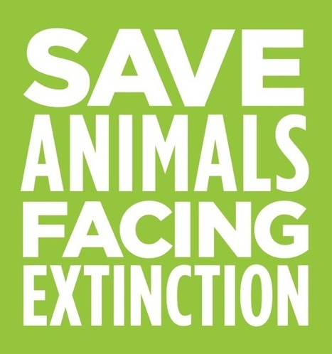 Save Animals Facing Extinction | Protect California's Ivory Ban! | Our Evolving Earth | Scoop.it