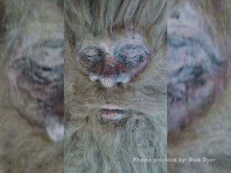 Las Vegas man claims he killed the first Bigfoot | Awesomeness | Scoop.it
