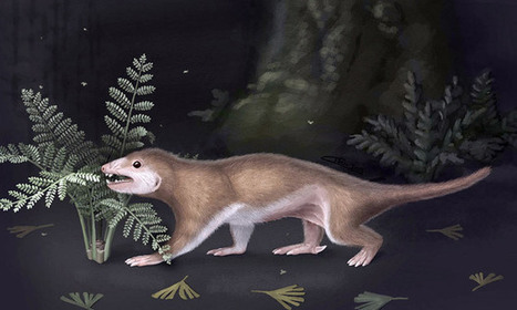 Jurassic squirrel's secret is out after 165m years   Science Matters   Scoop.it