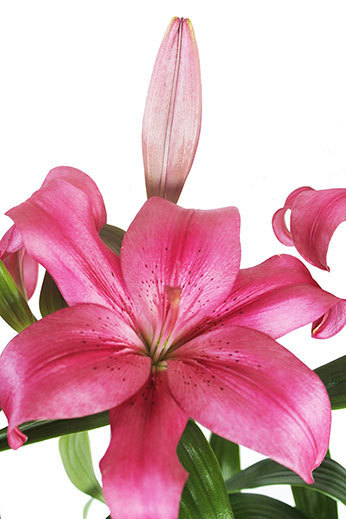 Fresh Flowers for Delivery   Fresh Flowers in Australia   Scoop.it