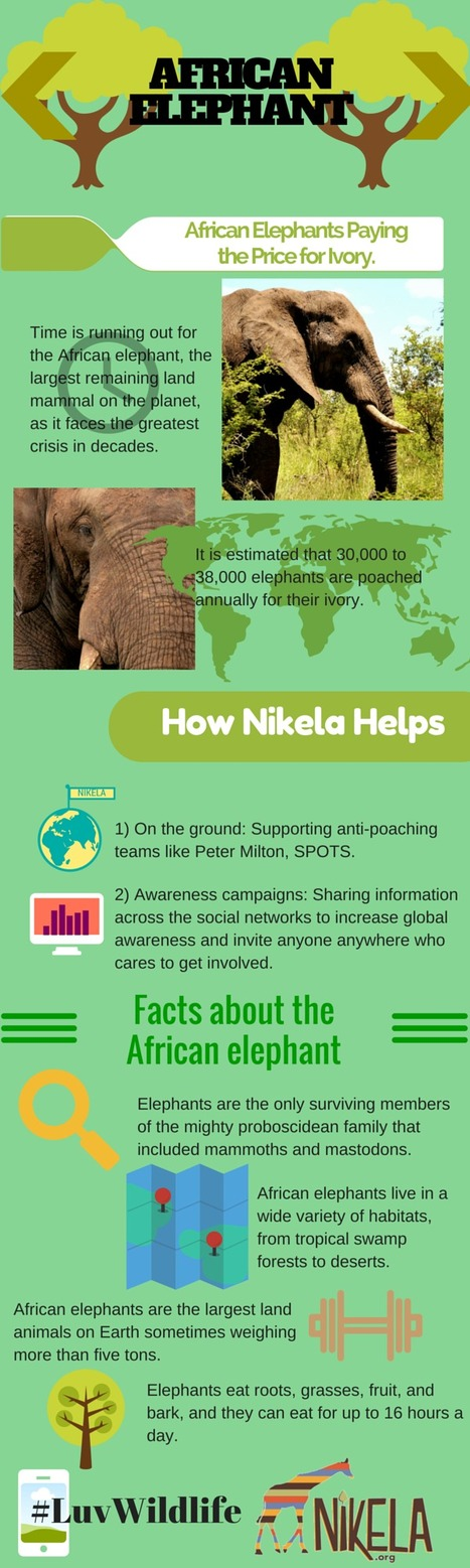Spotlight on Species - The Elephant | Wildlife Trafficking: Who Does it? Allows it? | Scoop.it