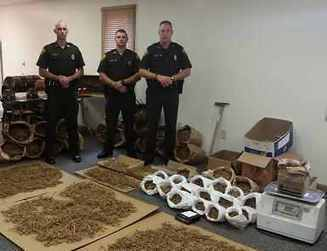 11 Arrested, $30,000 In Cash Confiscated from 'Heroic' Raids on Ginseng Farmers   Criminal Justice in America   Scoop.it