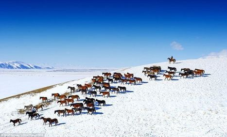 The wild horses of western China | Animals and Other Stories | Scoop.it