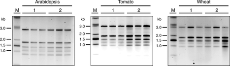 BMC Research Notes: Broad application of a simple and affordable protocol for isolating plant RNA (2015) | Publications from The Sainsbury Laboratory | Scoop.it