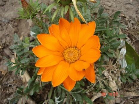 Flores y plantas | Flores y plantas | Scoop.it