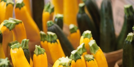 6 Things You Probably Didn't Know About Zucchini | Huffington Post | CALS in the News | Scoop.it