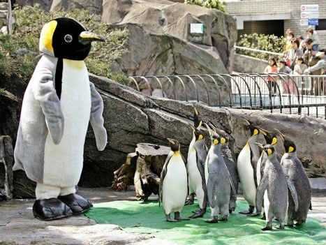 21 interesting facts about penguins that may just put a smile on your face. | Antarctica | Scoop.it