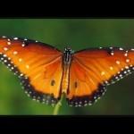 Stunning Nature Films by Louie Schwartzberg | My Science | Scoop.it