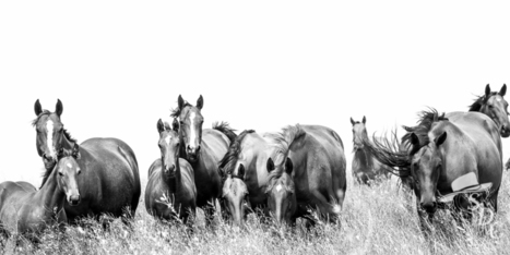 Horses in Black and White | Today's Horse Sense | Scoop.it