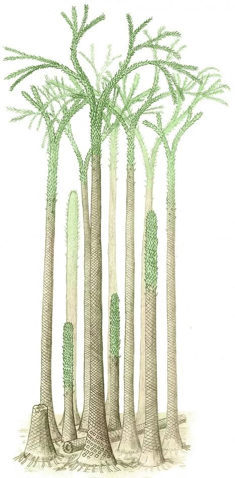 On a découvert une forêt tropicale au pôle nord | Aux origines | Scoop.it