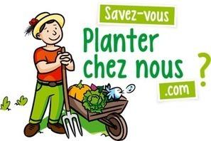Fabriquez des bombes à graines pour semer la biodiversité ! - Planter chez nous | Aimé | Scoop.it