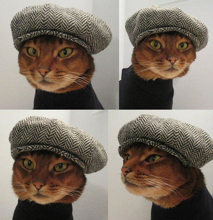 Newsboy cap for cats - Holy Kaw! | Ask The Cat Doctor | Scoop.it