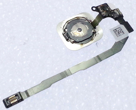 White Home Button Flex Cable Assembly Touch Sensor For iPhone 5S | Latest phone accessories | Scoop.it