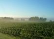 Carignan Day 2012 | Agenda du vin | Scoop.it