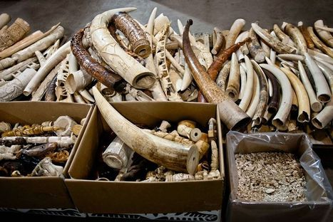 Convicted Drug Dealer Indicted for Selling Rhino Horns | Animal Cruelty | Scoop.it