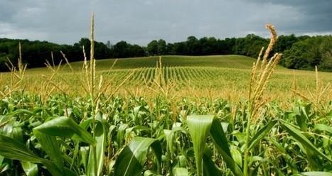 Las consecuencias del uso de biocombustibles | Sostenibilidad | Scoop.it