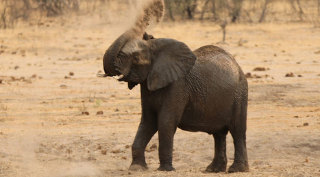 Harsh drought forces Zimbabwe to sell wildlife | Convincingly Contrarian Crumbs | Scoop.it