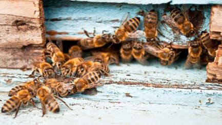 Belgique - Un tiers des colonies d'abeilles a disparu cet hiver | Abeilles, intoxications et informations | Scoop.it