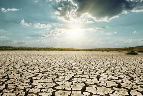 California's lack of rainfall is major threat to winemakers in 2014 | Southern California Wine and Craft Spirits Journal | Scoop.it