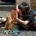A funny cat and a man play a song | 2 dogs are very happy | Scoop.it