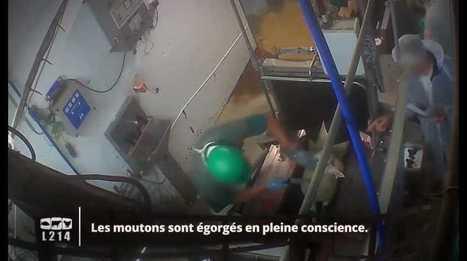 Une nouvelle vidéo choquantede l'association L214montre des moutons égorgésvivants, pour l'Aïd el-Kébir,dans un abattoir de Nouvelle-Aquita... | Comment va ma Planète ? | Scoop.it