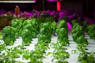 Et si on aménageait des fermes dans nos villes? - Rue89 | Un potager dans la ville | Scoop.it