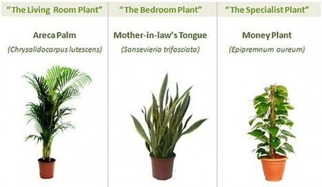 All You Need for Fresh Air: 3 Essential Green Plants | Gardening Life | Scoop.it
