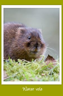 """Ratty"" bucks national trend!   Rapid Environmental Services   Scoop.it"