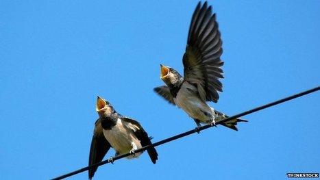 The surprising uses for birdsong   iScience Teacher   Scoop.it