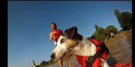 Vidéo : Al le chien a surfé le mascaret en Gironde | CaniCatNews-actualité | Scoop.it