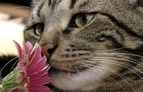 Cat Flower | AMAZING WORLD IN PICTURES | Scoop.it
