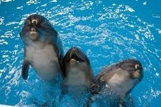 Scientists offer declaration on rights of dolphins | Armenia News - NEWS.am | Earth Island Institute Philippines | Scoop.it